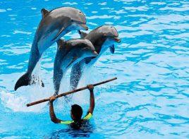 Alanya Dolphin Show 10